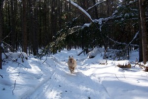 <b>One of the many trails in Deep River submitted by Kim Knight.</b>